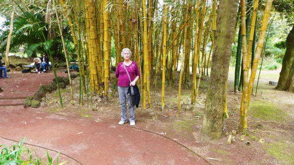 Romola standing in a bamboo grove