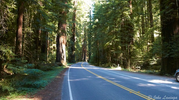 The road is well shaded by giant trees