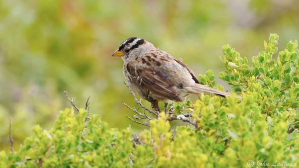 Some local birds