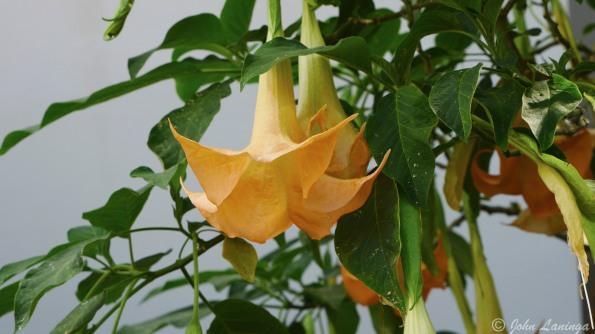 Flowers in the arboretum, 2
