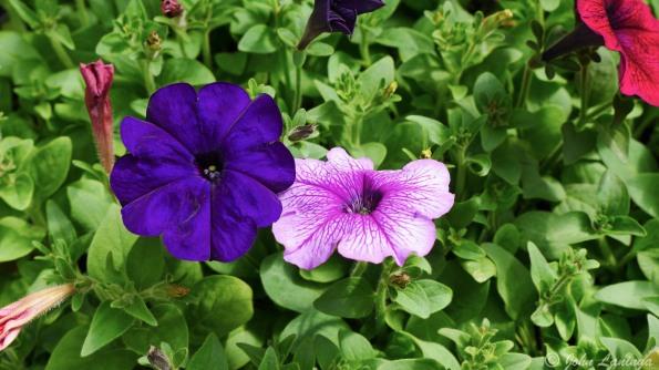 Flowers in the arboretum, 1