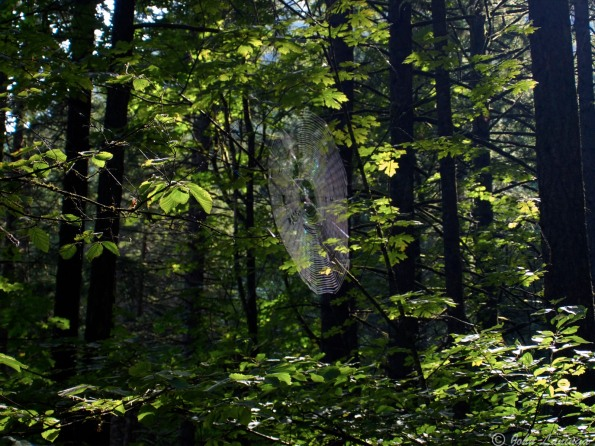 A spider web, just visible in the sunlight