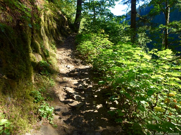 The trail gets narrower and bumpier as we get higher