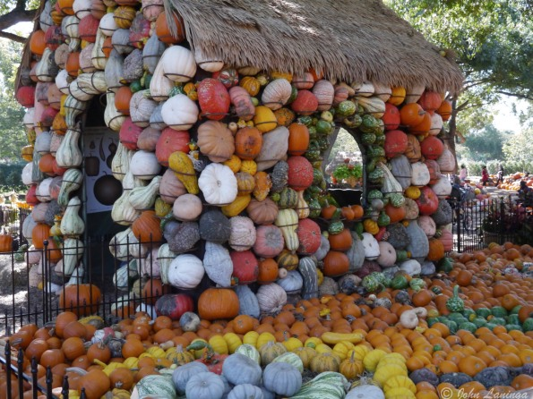 A house built from multicolored pumpkins