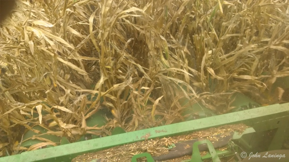 Here, the cutters grab the corn stalk, and move it into the processing area.