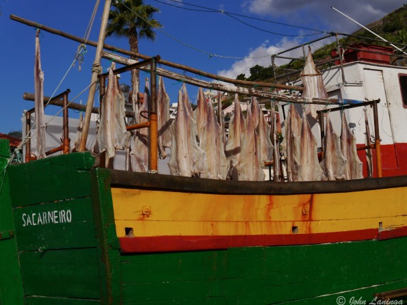 Drying sharks