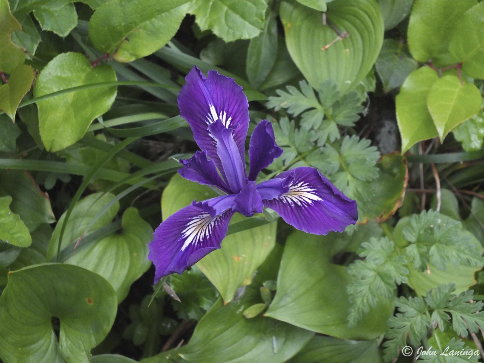 Beautiful purple colors