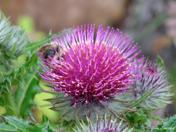 A bee hard at work