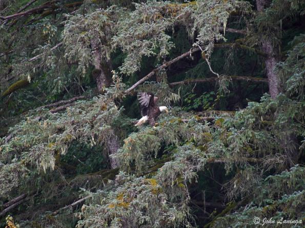Eagle, landing