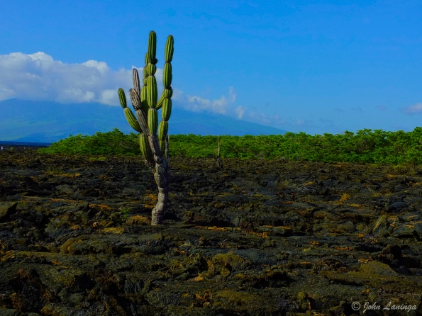 An image from last year's Galapagos trip