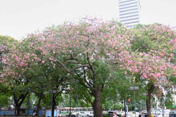 Still summer here, so trees are blooming