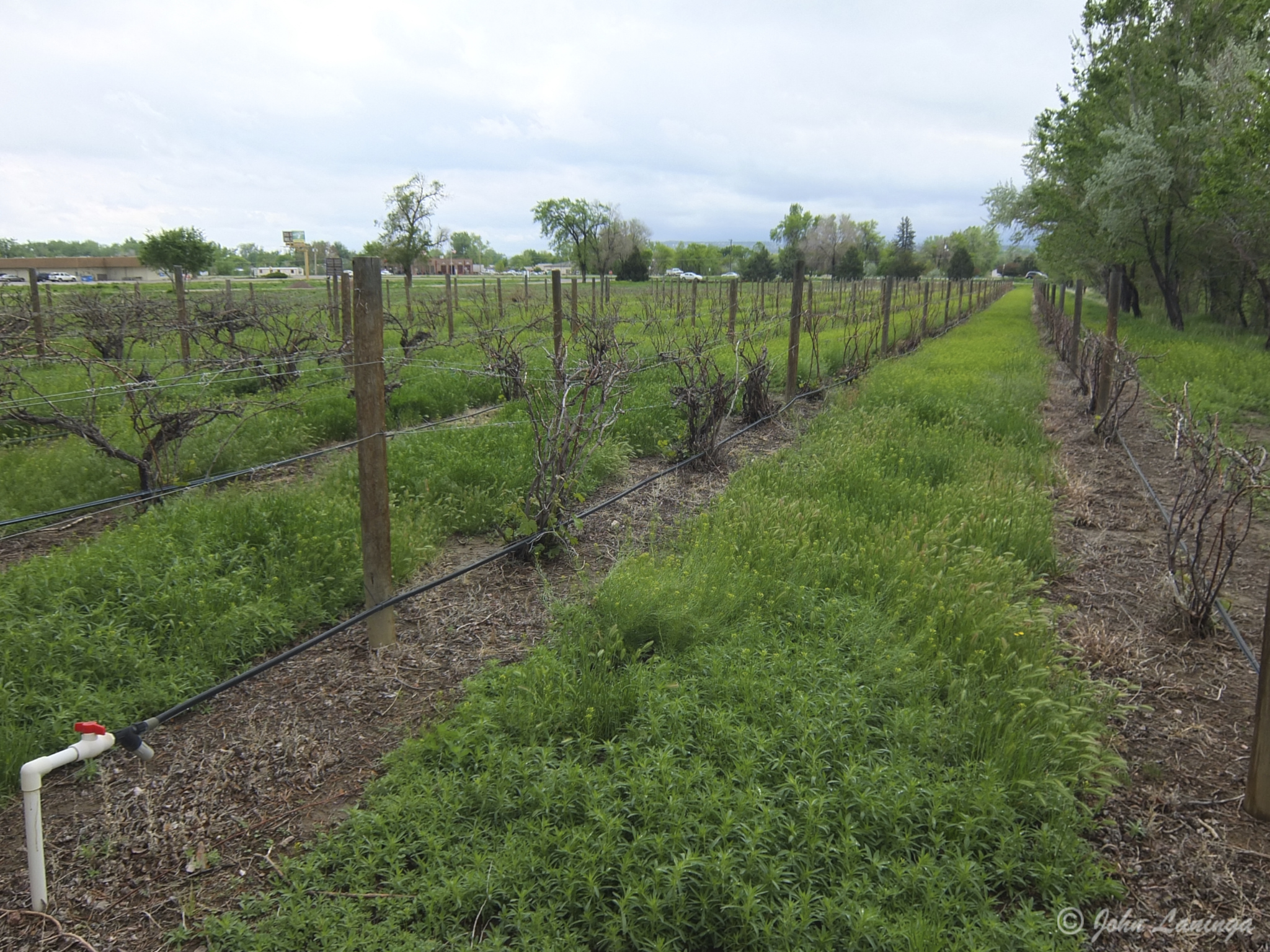 Vines, ready to grow!