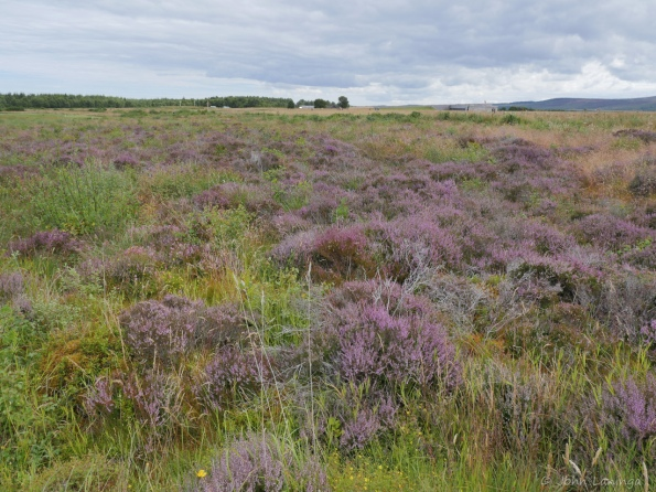 The heather made for hard going