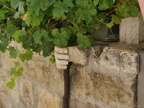 Hands holding a grape vine