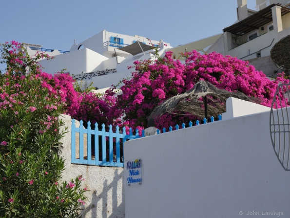 Colorful flowers against the white buildings