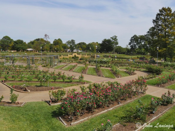 An overview of the Tyler Rose Garden