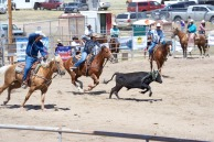 Team calf roping