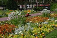 Many flowers at one of the city's main parks