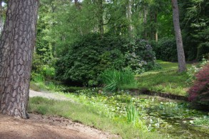 Beautiful nature walks with ponds and water lillies